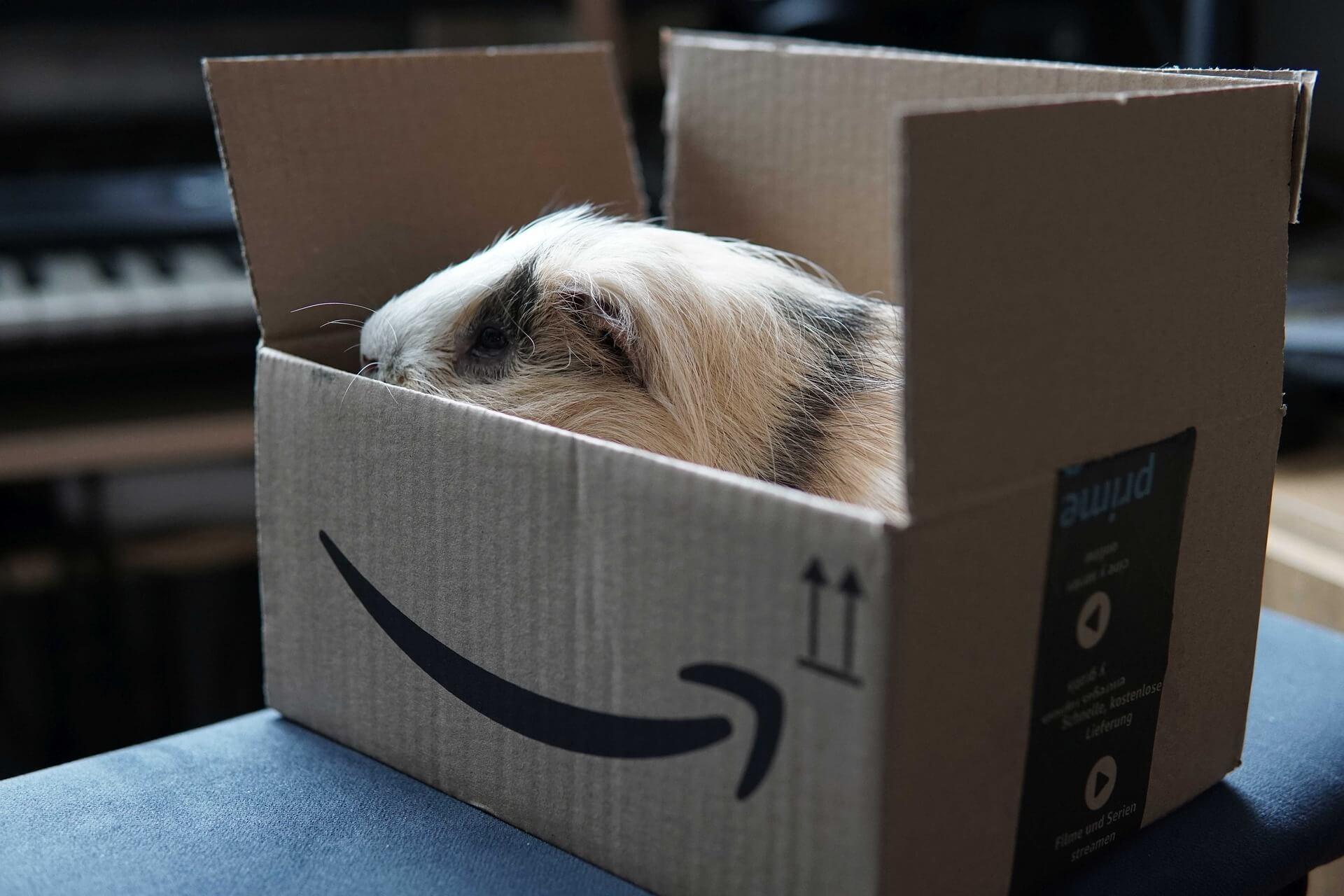 Amazon Prime, Live TV